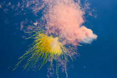 Abstract:  daytime fireworks in the blue sky Stock Photo