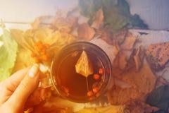 Abstract de herfstconcept - gele en rode de herfstbladeren en kop van zwarte koffie Stock Foto's