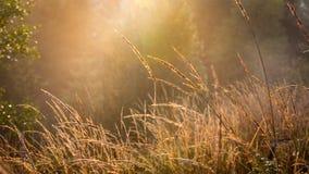 Abstract de herfstgras op weide Royalty-vrije Stock Afbeelding