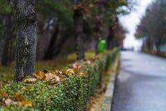 Abstract de herfstlandschap Stock Foto's