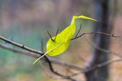 Abstract de herfstlandschap Stock Afbeelding