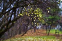 Abstract de herfstlandschap Stock Foto