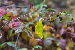 Abstract de herfstlandschap Stock Fotografie