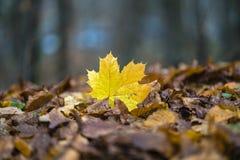 Abstract de herfstlandschap Royalty-vrije Stock Foto's