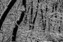 Abstract de winterlandschap in bos, zwart-wit Royalty-vrije Stock Afbeeldingen