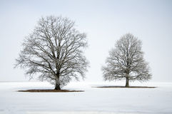 Abstract de winterlandschap met een eenzame boom in witte sneeuw Stock Fotografie