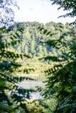 abstract de zomerbos Royalty-vrije Stock Afbeeldingen