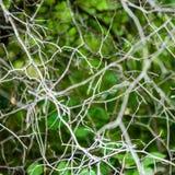 abstract de zomerbos Stock Afbeeldingen