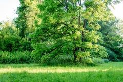 abstract de zomerbos Stock Afbeelding