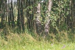 abstract de zomerbos - uitstekend filmeffect Stock Fotografie