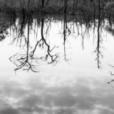 Abstract dead trees reflected in a lake, art of pattern and surface, bare tree trunks and branches, gently clouds in the water. Black and White. Focus on water royalty free stock photo