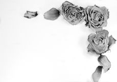 Abstract decoration - dried roses and petals for letter, website Royalty Free Stock Image