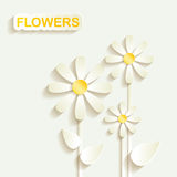 Abstract decorative Chamomile. Abstract decorative background with Chamomile vector illustration
