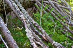 Abstract deel van een oude boom Stock Afbeeldingen