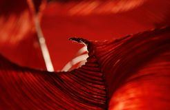 Abstract deep red folded surface Stock Photo