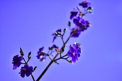 Abstract defocused blue flower stock images