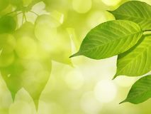 Nature Spring Summer Bokeh Background with Green Leaves and Sunlight Royalty Free Stock Photography