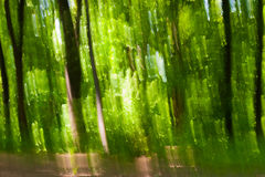 Abstract defocused forest Royalty Free Stock Images