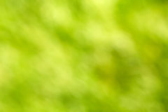 Abstract defocused green background Stock Images
