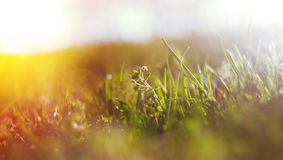 Abstract defocused spring grass Royalty Free Stock Photography