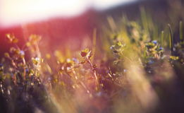 Abstract defocused spring grass Royalty Free Stock Images