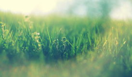 Abstract defocused spring grass with the sunlight Royalty Free Stock Image
