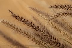 An abstract of desert blooming grasses. stock photos