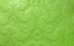 Green abstract seamless pattern Stock Photo