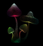 Abstract design of colorful mushroom in black isolated backgroun Stock Photo