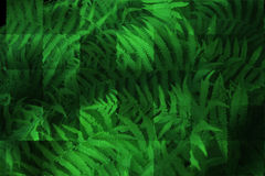 Abstract design of fern stems. Abstract design made up of green textured fern stems Royalty Free Illustration