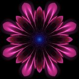 Stylized symmetrical flower. Abstract design in fractal art style - symmetrical flower with glowing Royalty Free Stock Images