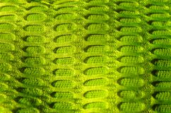 Green material close up background royalty free stock images