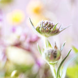 Abstract detail of blooming spring flower, selective focus Royalty Free Stock Images