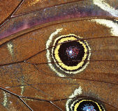 Abstract - Detail of butterfly wings Stock Image