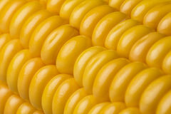 Abstract detail of corn Royalty Free Stock Photography