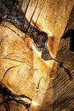 Abstract detail op een rotte stomp Stock Afbeeldingen