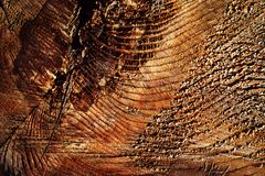 Abstract detail op oud hout Royalty-vrije Stock Foto