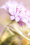 Abstract detail van bloeiende de lentebloem, selectieve nadruk Royalty-vrije Stock Foto