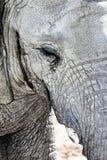 Abstract detail van een olifantshoofd Stock Afbeelding