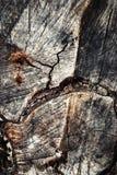 Abstract detail van gesneden hout Stock Afbeelding