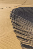 Abstract Detail van Zand duin-Kanarie Eilanden, Spanje Stock Fotografie