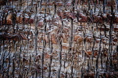 Abstract Detailed Palm Bark. Abstract Detailed Texture of Palm Bark Stock Images