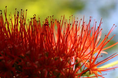 Abstract Details of an Exotic Red Flower Stock Photos