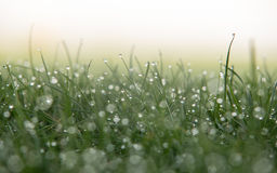 Abstract Dew on Grass Royalty Free Stock Image