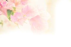 Abstract die DE van document bloemen wordt geconcentreerd Royalty-vrije Stock Foto