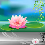 Abstract- Divine Lotus Flower - Vector Background. Serene Lotus flower in a lake - almost zen like Vector Illustration