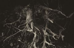 Abstract donker wortelsdetail royalty-vrije stock fotografie