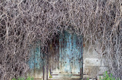 Abstract door with branches. Artistic old door surrounded by leafless branches Royalty Free Stock Images