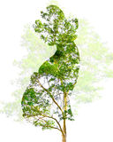 Abstract Double exposure  art  pregnant with branch tree and flower Stock Image