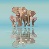 Abstract draw of elephant family mom dad kids at watering Royalty Free Stock Image